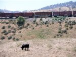 BNSF train stopped
