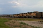 BNSF9868, BNSF8833, BNSF9942, BNSF8812 + 65 others stored in a line