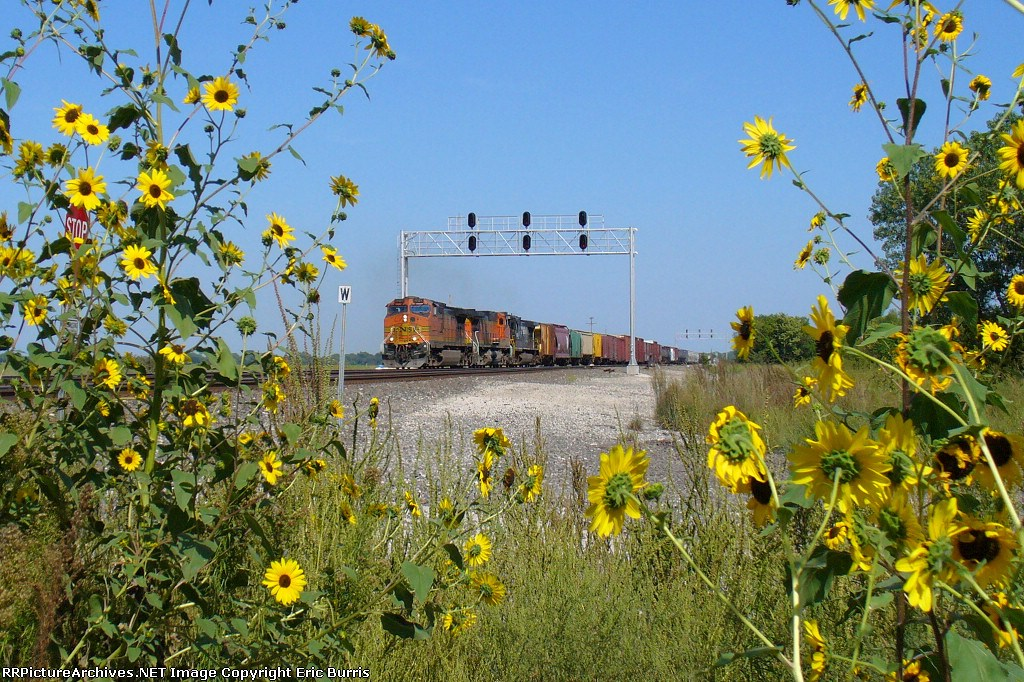 Somewhere beyond the pretty flowers is a train.
