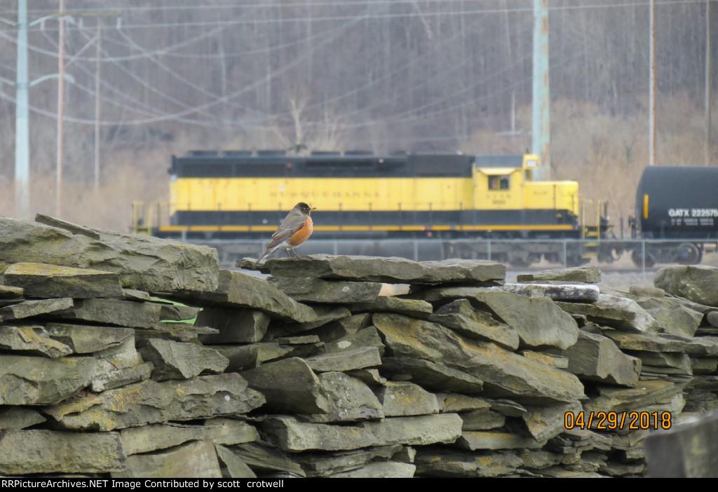 A lone robin