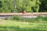 L-RDV8141 conductor drops the Flynn House Track derail