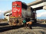 CN 5415 switching tracks, making manual switch change