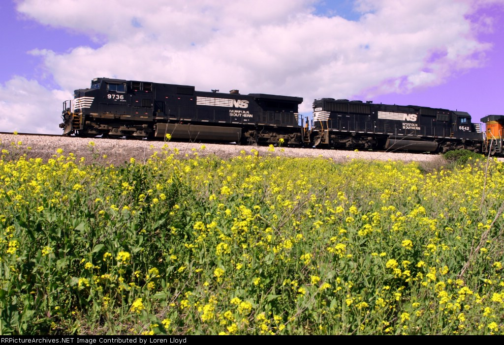 Norfolk Southern engines on loan to BNSF at Franklin Canyon