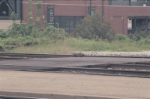 My little grounhog friend... waiting for the Amtrak