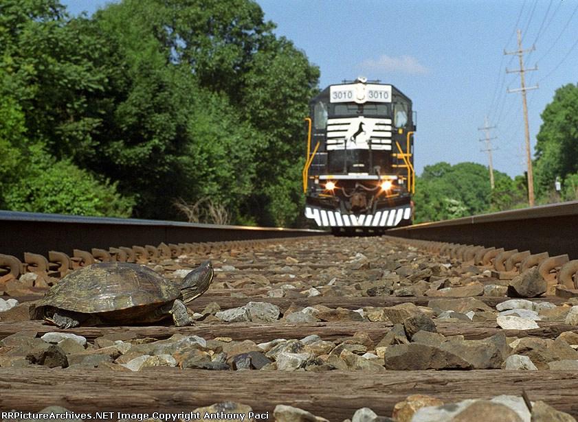 Turtle on the tracks