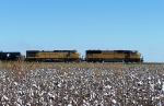 Southbound Manifest Over a Cotton Field