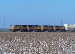Southbound Intermodal Over a Cotton Field