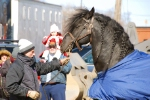 Ringling Brothers and Barnum & Bailey Circus horse and trainer
