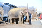 The first elephant is unloaded