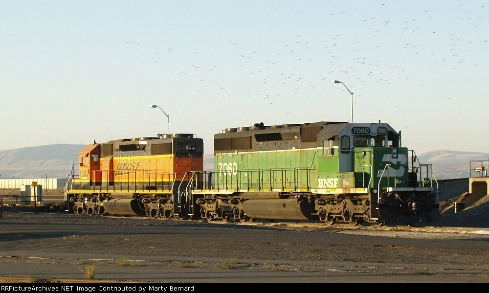 BNSF 7060 and 1803 Plus Seagulls