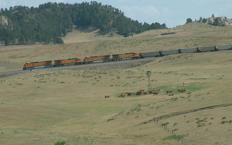 Coal Train passes the cows