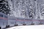 The Mid Portion of Tr. 14, The Coast Starlight in the Cascades