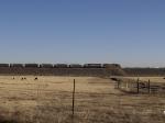 Coal train waiting for clearance