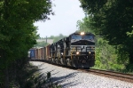 NS 118 runs through a tunnel of trees