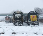 Snowy trio at Mitchell IL
