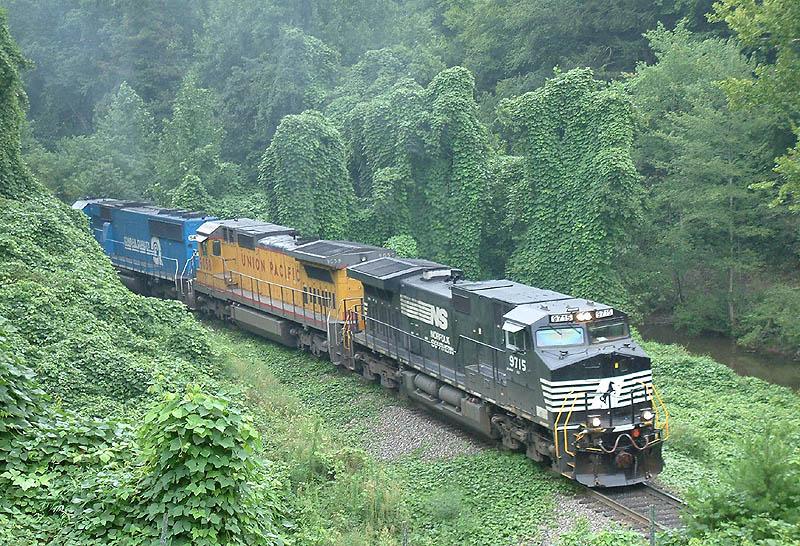 NS 135 in the kudzu jungle