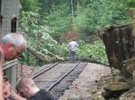 Tree on the tracks