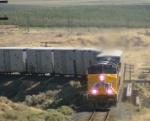 Froot Loop Express