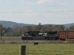 NS 9852 and the lone cow