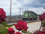 Roses and Trains