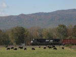 NS 9852 takes V92 past a cattle farm