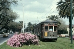 Streetcar 962 and azaleas on Carrollton Ave.