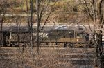 NS 8827 Peeks Through The Trees