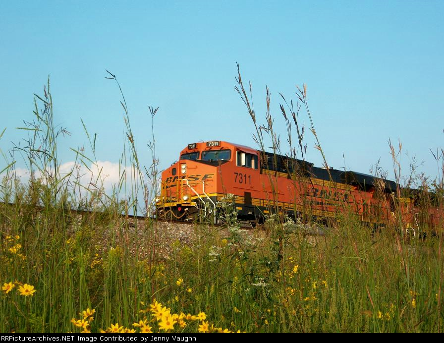 BNSF 7311 in the weeds