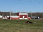 The local cows enjoy the early spring weather as 24 crusies by