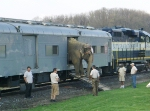 Elephant is led out of RBBX 63011