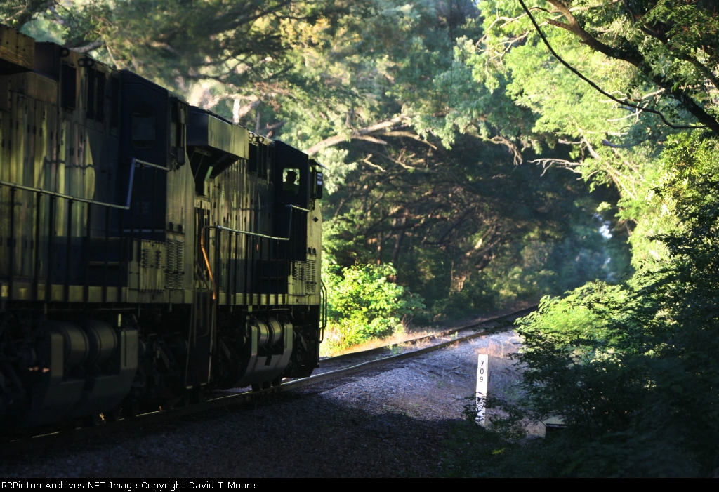 CSX 807 Leads an empty T147-30 north under a canopy of trees.
