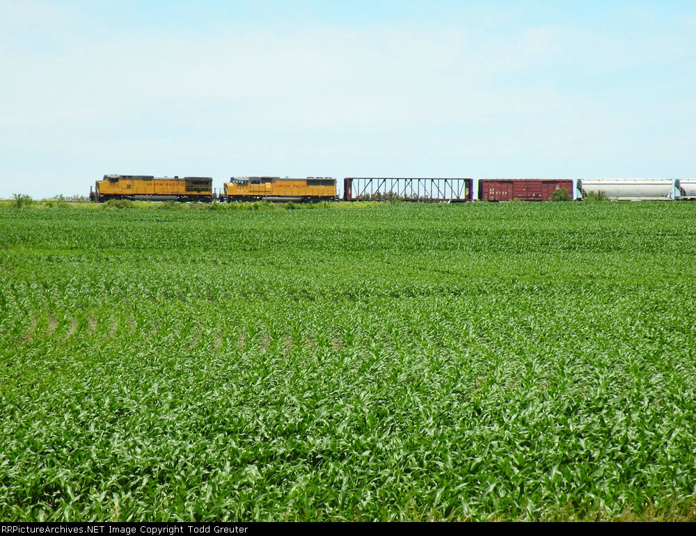 UP Freight over Cornfield