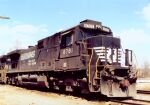 NS 8781 poses in the sun