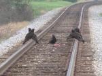 Railkill