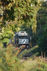 NS 5643 hiding in the brush