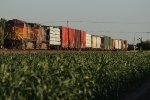 BNSF 5417 Eastbound Over A Sea of Green