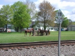 Horses at MP 78