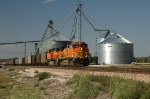 BNSF 5693-5691, both GE AC44CW with an eastbound loaded coal train passes the grain elevators