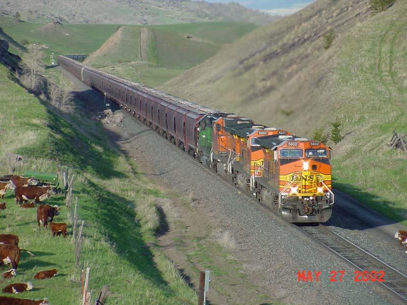 BNSF Grain train on the MRL