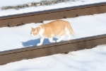 Foamer Cat