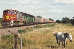 Westbound empty coal train meets horsepower