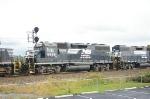 NS 5576 at Tulp