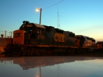 Geeps at Dusk