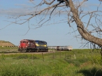 Framed by a dead tree, 366's power waits out on the windy prairie