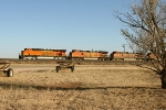 BNSF 7403, 4020, and 1005