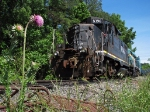Pink flowers and black locomotives