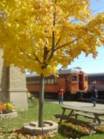 Fall colors excursions