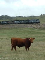Cattle, Green Grass, and Trains