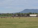 The 44V grain train heading to Harrisonburg