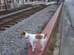 Shelley Looks for a Train